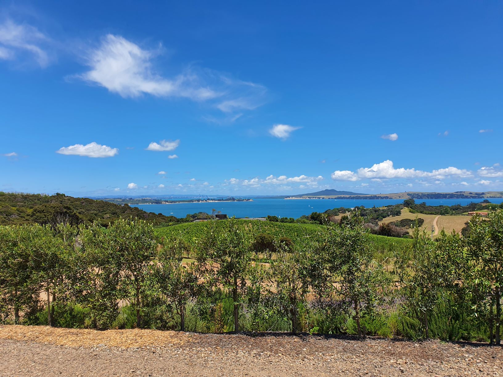 The view from Mudbrick Winery